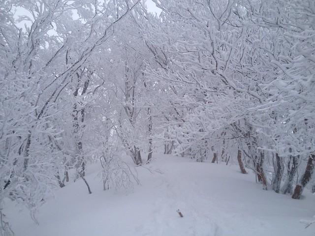 綿向山 登山道 樹氷