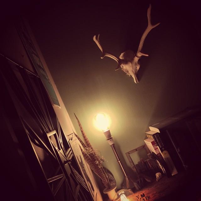 #antlers #deer #skull #deerskull