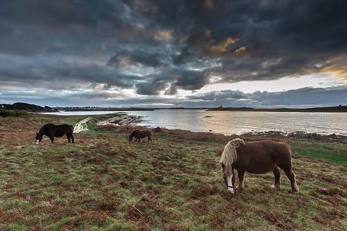 sunset horse cloud seascape france landscape cheval brittany bretagne nuage aber lumiére aberwrach finistére yannpouliquen finiscape