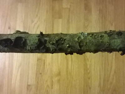 Branch After