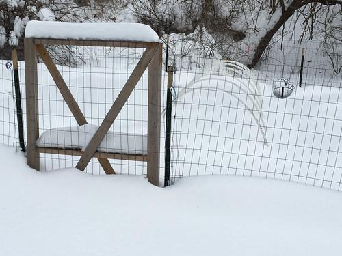snow covered garden IMG_0130