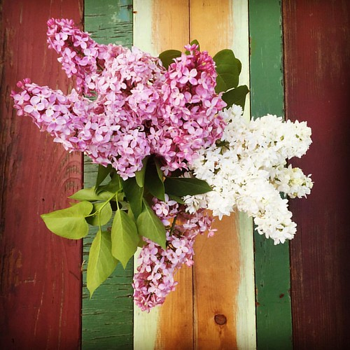 lilac love 😍