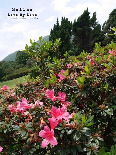 陽明山踏青一日遊景點 第二停車場杜鵑茶花園 (1)