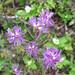 9-Zealand-Falls-Flower