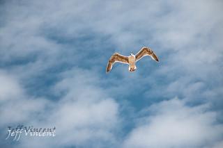 Dunwich Beach flyby