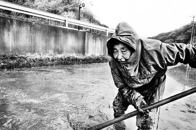 Tanbo w?k? (The Rice Field worker)