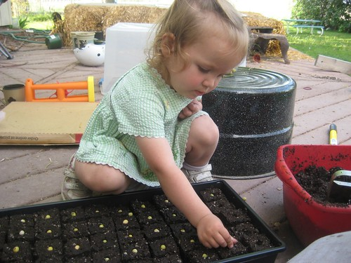 k planting