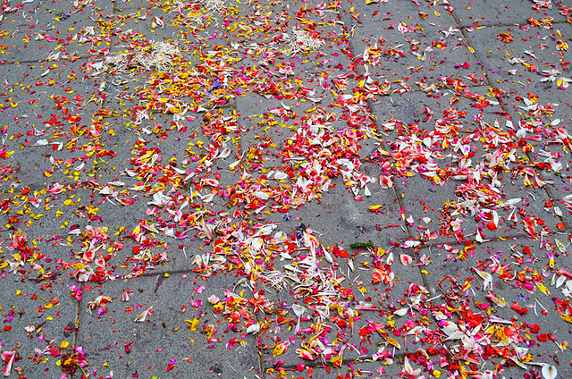 Scattered Flowers, Corpus Christi, Flower Carpets, La Orotava, Tenerife