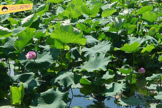lily pond - ueno park 2