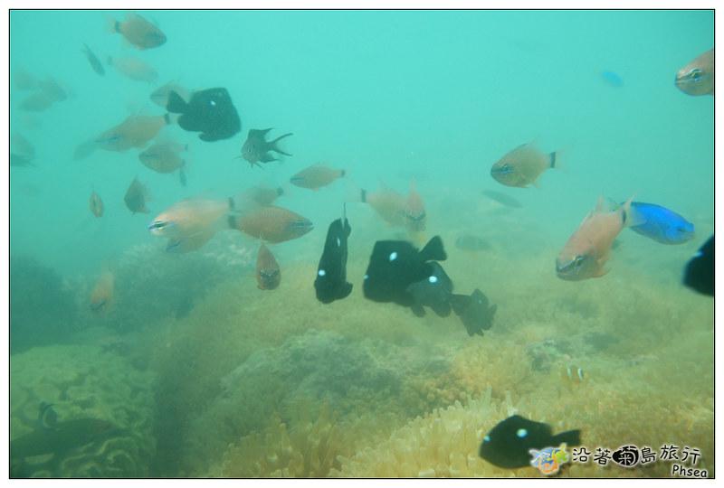 2013歐船長東海休閒漁業_96