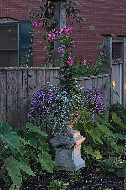 Soulard Neighborhood, in Saint Louis, Missouri, USA - flower pot