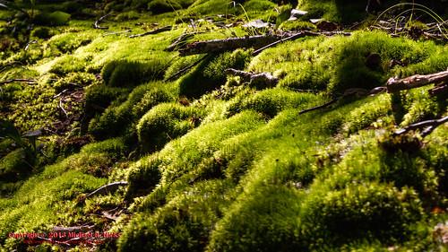 landscape geotagged moss unitedstates nashville hiking tennessee cloverhill percywarnerpark warnerparks canon7d nashvillehikingmeetup vaughnsgap mossyridgetrail sigma18250mmf3563dcmacrooshsm geo:lat=3606650596 geo:lon=8689118429