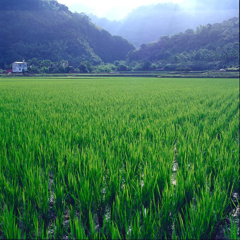 花東 金針大會 底片也湊一角(2)三仙台 赤科山