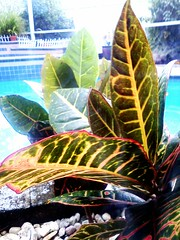 plants by the pool