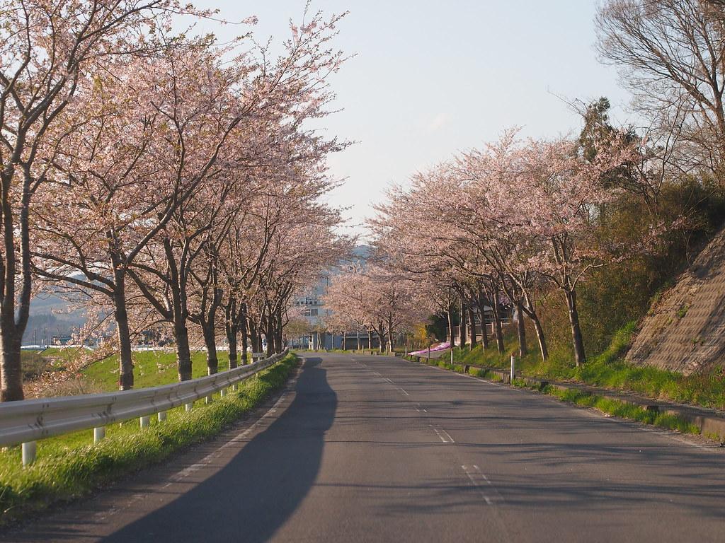 Cherryblossom in Shiroyama Park