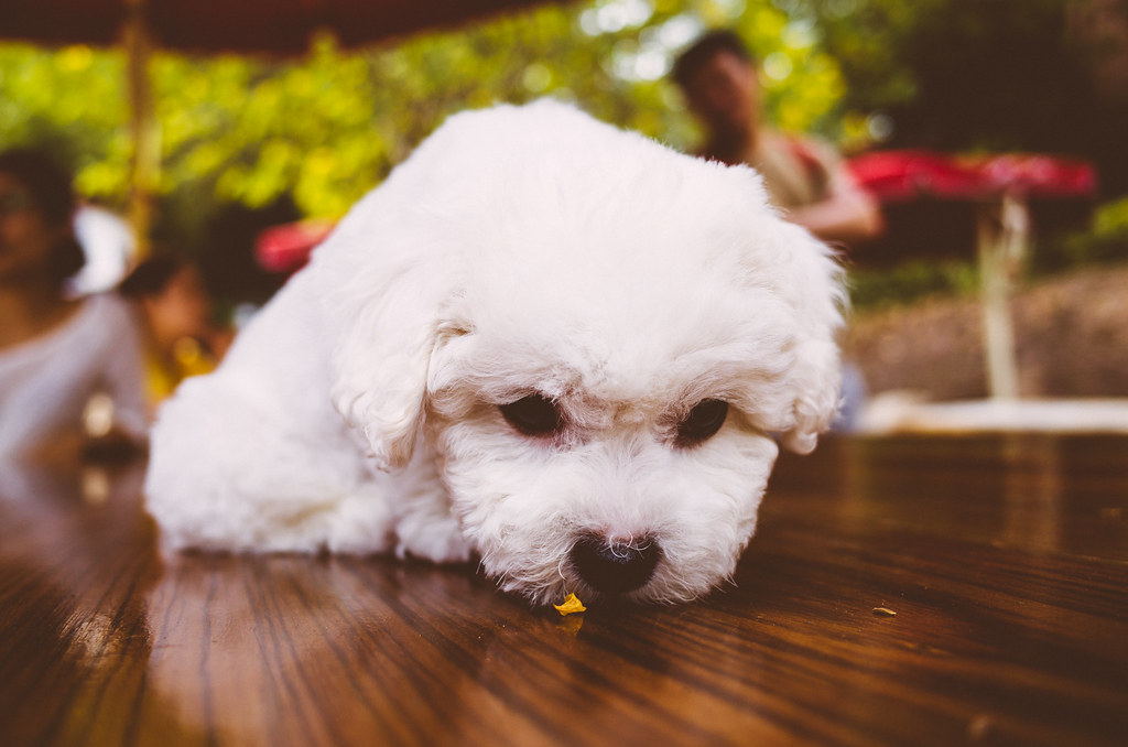 a cute little dog (萌狗) by Wilson.L