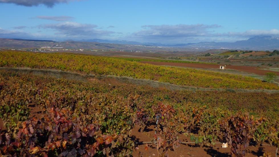 7. Viñedos en Navarrete, La Rioja. Autor, Calafellvalo