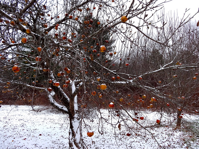 snow apples