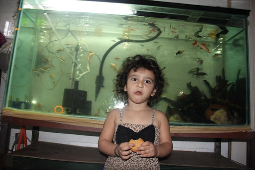 Zinnia Fatima  And Marziyas Fish Tanks by firoze shakir photographerno1