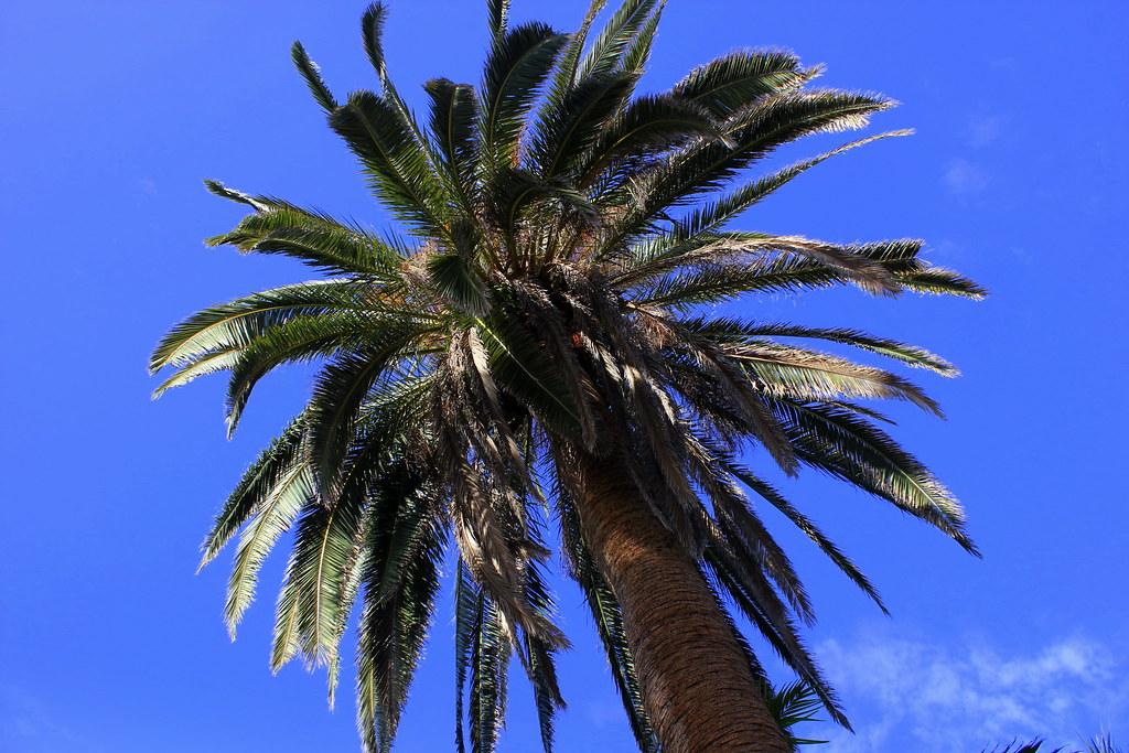 Tenerife 1280