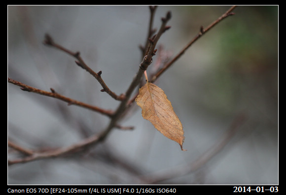 櫻花樹最後一葉