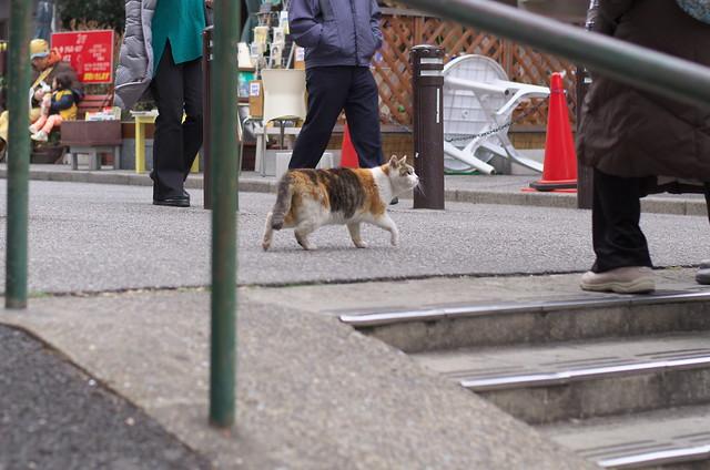 東京路地裏散歩 上野・谷中 夕やけだんだんのネコ2014年2月6日