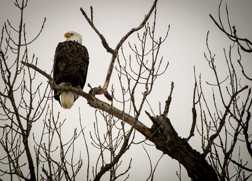 Eagle Watching on the River Road