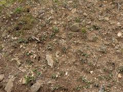 Dirt_cliffedge-rocks-plants-sticks-roots_wide-2.jpg