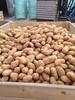 De eerste primeur aardappelen uit Israël!