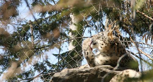 20140408-Toledo_Zoo-0064.jpg