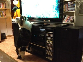 Saya watching TV!