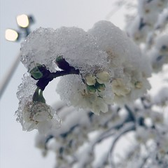 Schneeblüte unter Flutlichtmast