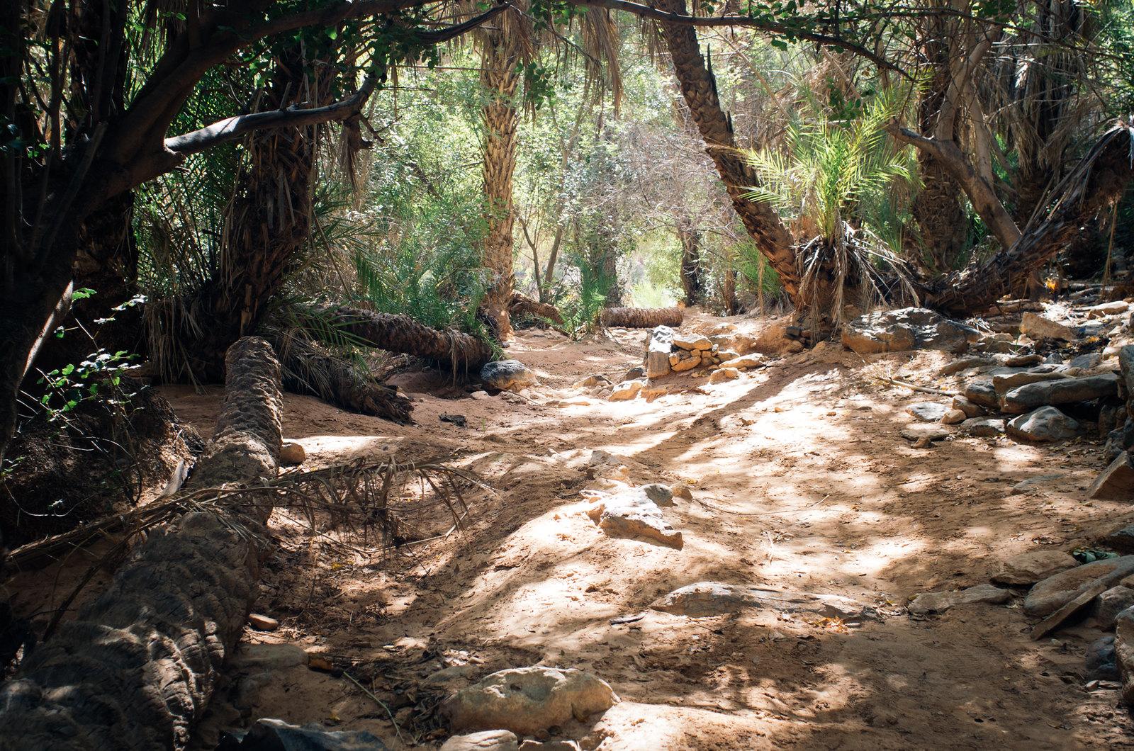 Amtoudi, anti-Atlas - 5 jours de trek au Maroc - À l'ombre de la palmeraie