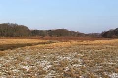 Wintery plain