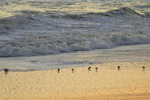 ocean beach sunrise dawn surf florida sandpiper indialantic