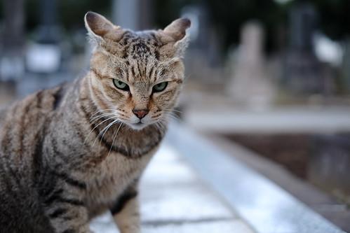 Cat in Yanaka