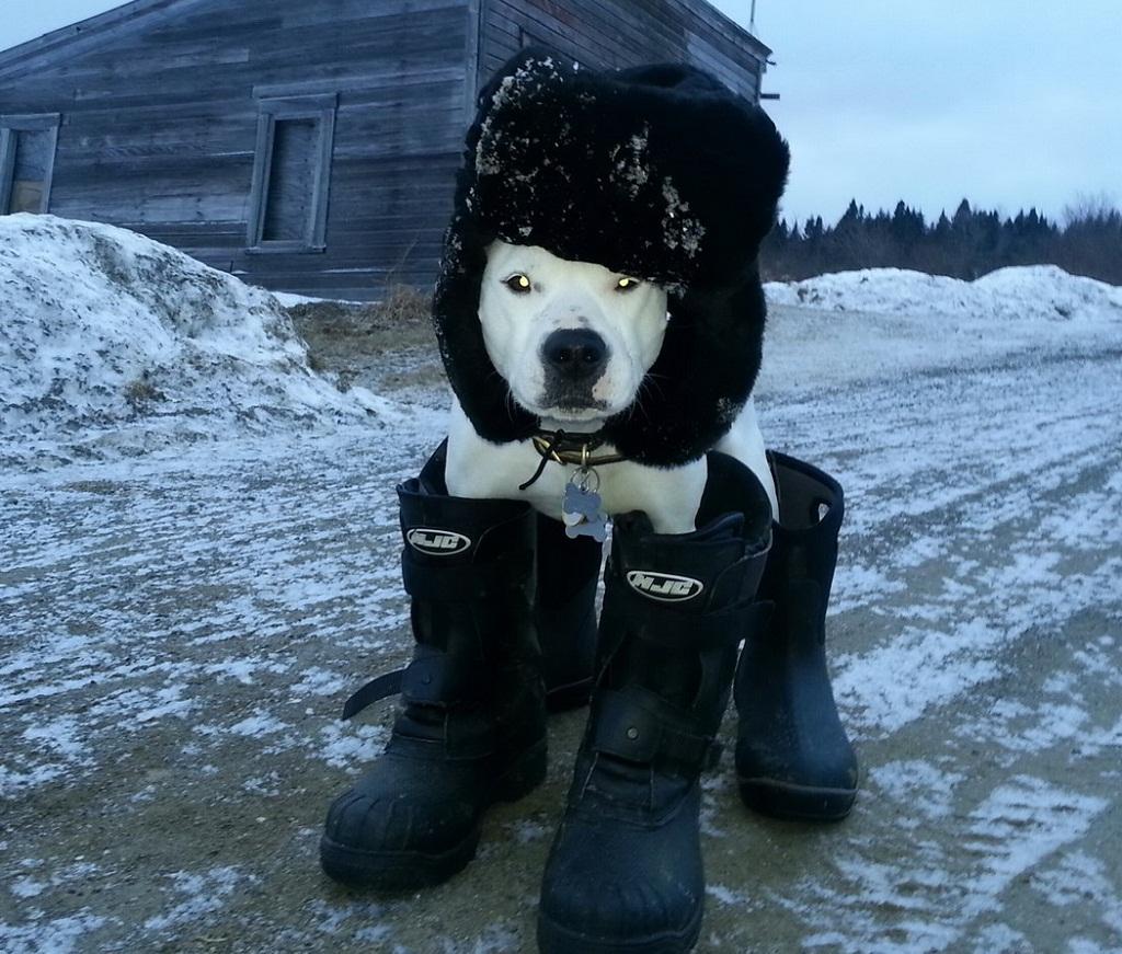 imagen graciosa de perro listo para la nieve