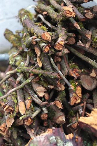 plaza flores macro méxico hojas lluvia madera centro fuente paisaje jr puebla niebla frio presa montañas tradicion vegetacion palaciodegobierno quiosco leña necaxa producciones huauchinango huehues