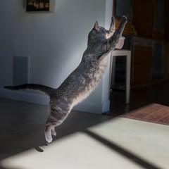 It's #HappyHour! #tgif #highfive #catdancing #jumpforjoy