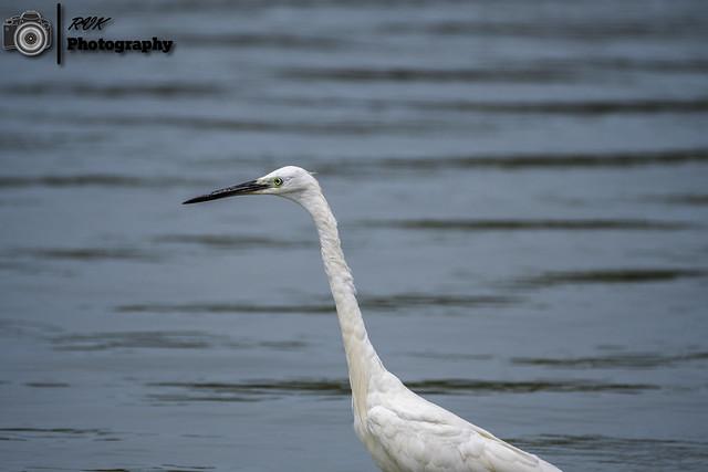 Pulicat Lake Bird Sanctuary, India
