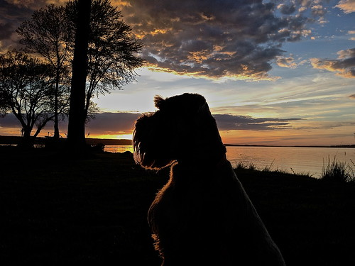 sunset summer dog sun lake cute art water clouds puppy landscape photography photo spring