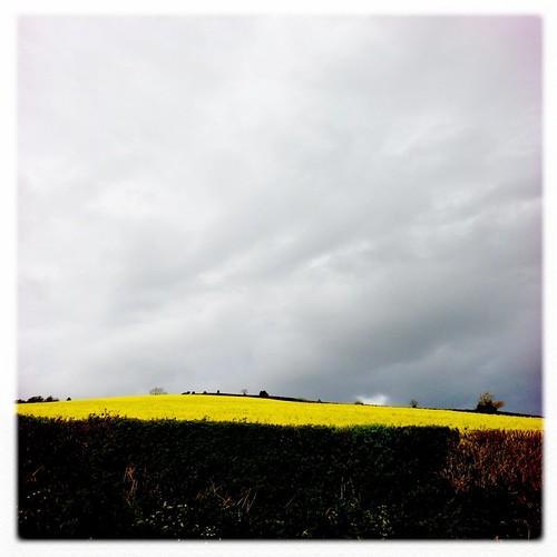 Yellow #19