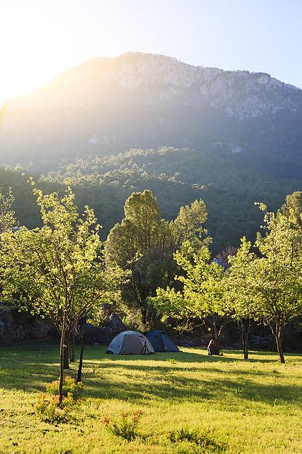 Лагерь во фруктовом саду