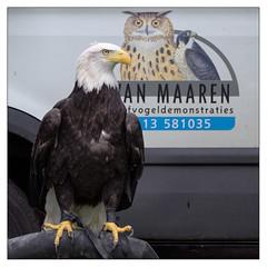 Vogeldemonstratie Westerhonk 21-6-2013