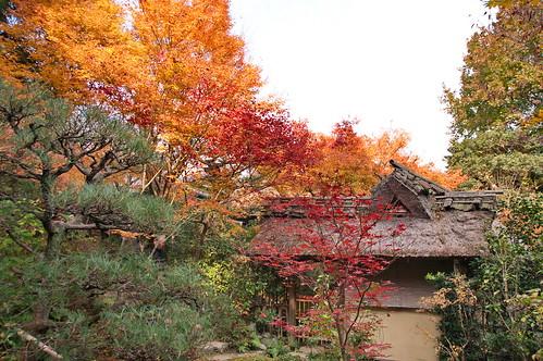 【写真】2012 紅葉 : 厭離庵/2020-10-15/IMGP7827