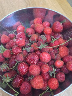 Bumper crop of strawberries this year