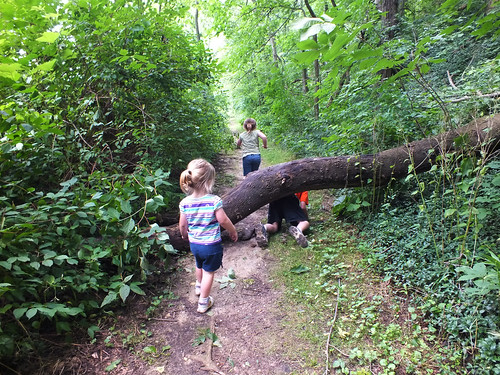 Tree down over the trail