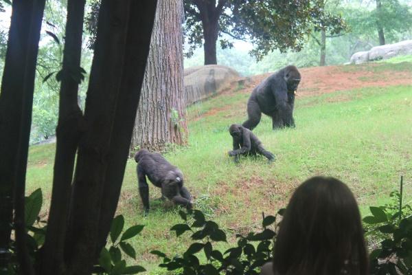 Atlanta Zoo '13, 7