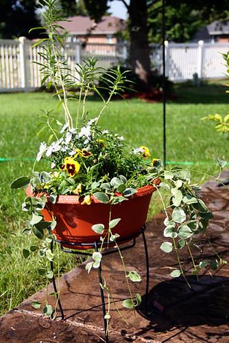 Autumns-pot