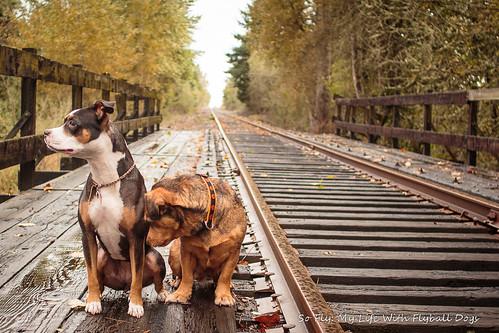 Train Tracks-9523